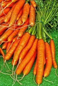 carota