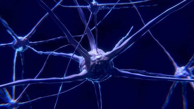 neurone, cellula nervosa
