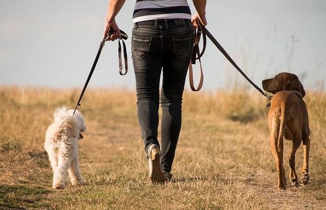donna cammina con i cani